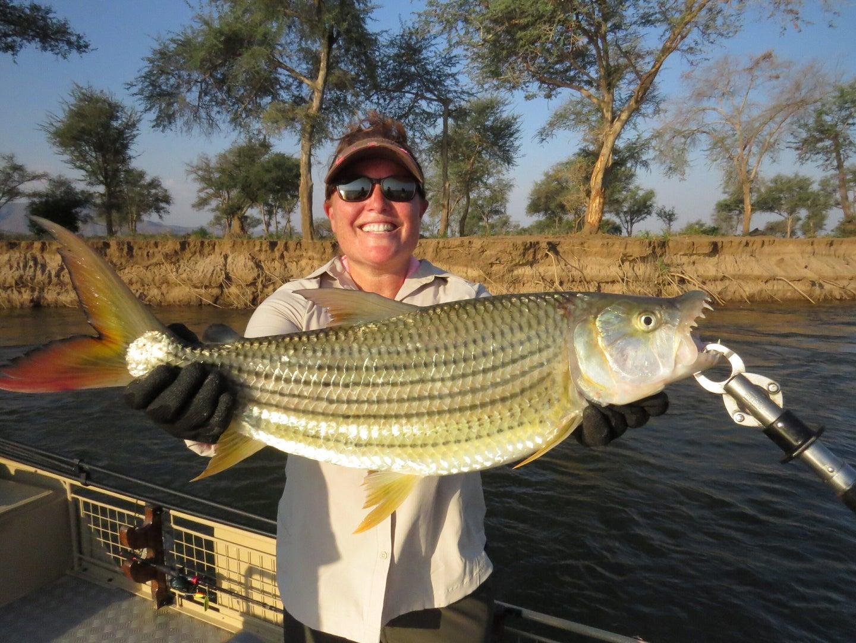 Angler holding a tiger fish.