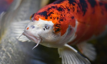 Angler Catches Huge Invasive Species in a Utah Lake