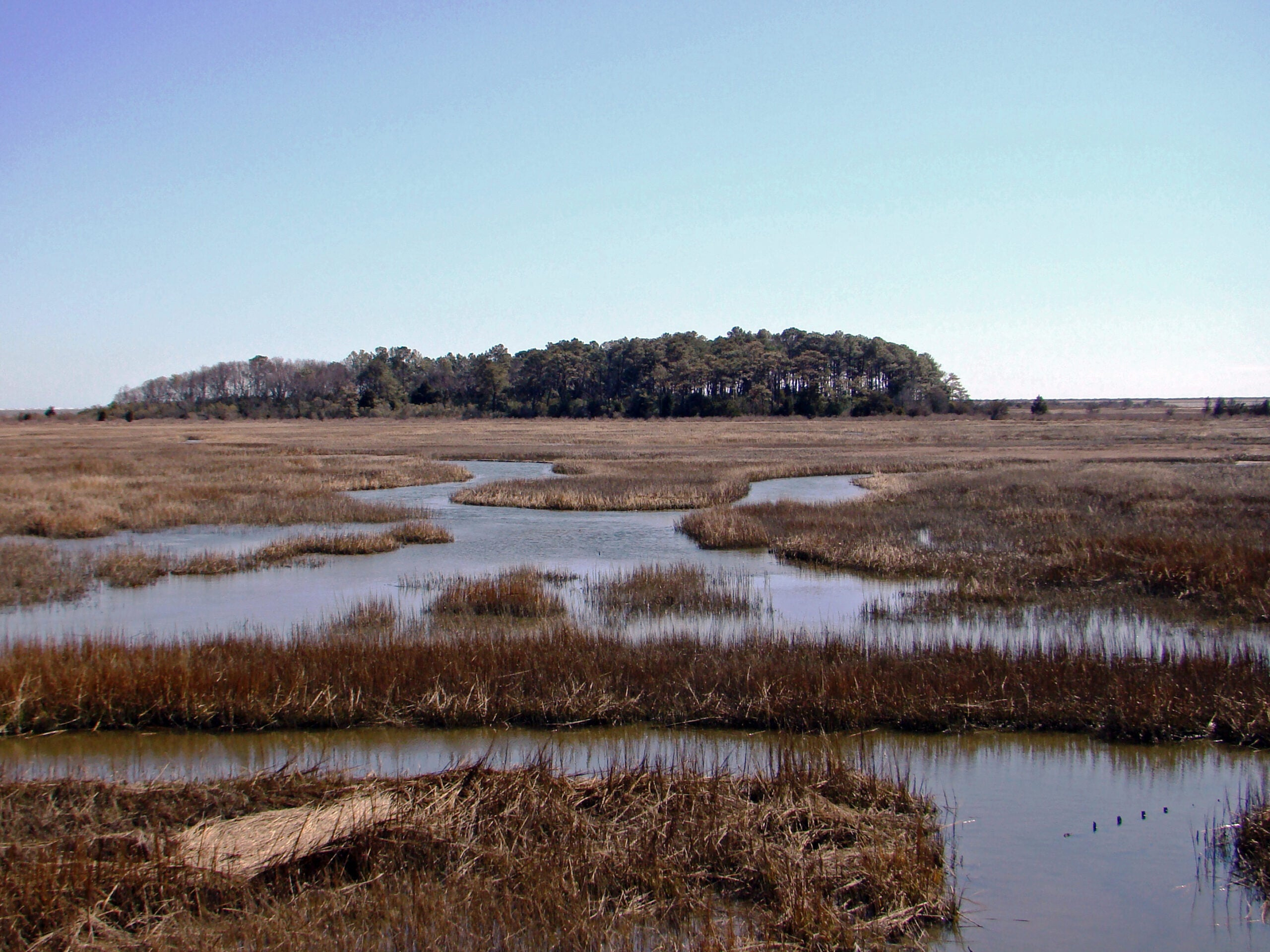 Eastern Shore of Virginia National Wildlife Refuge.
