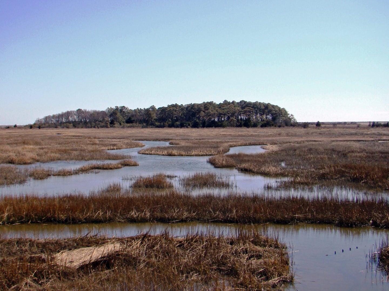 Eastern Shore of Virginia National Wildlife Refuge.