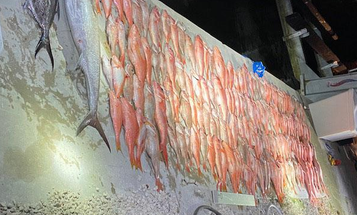 170 Illegally Caught Fish, No Jail Time
