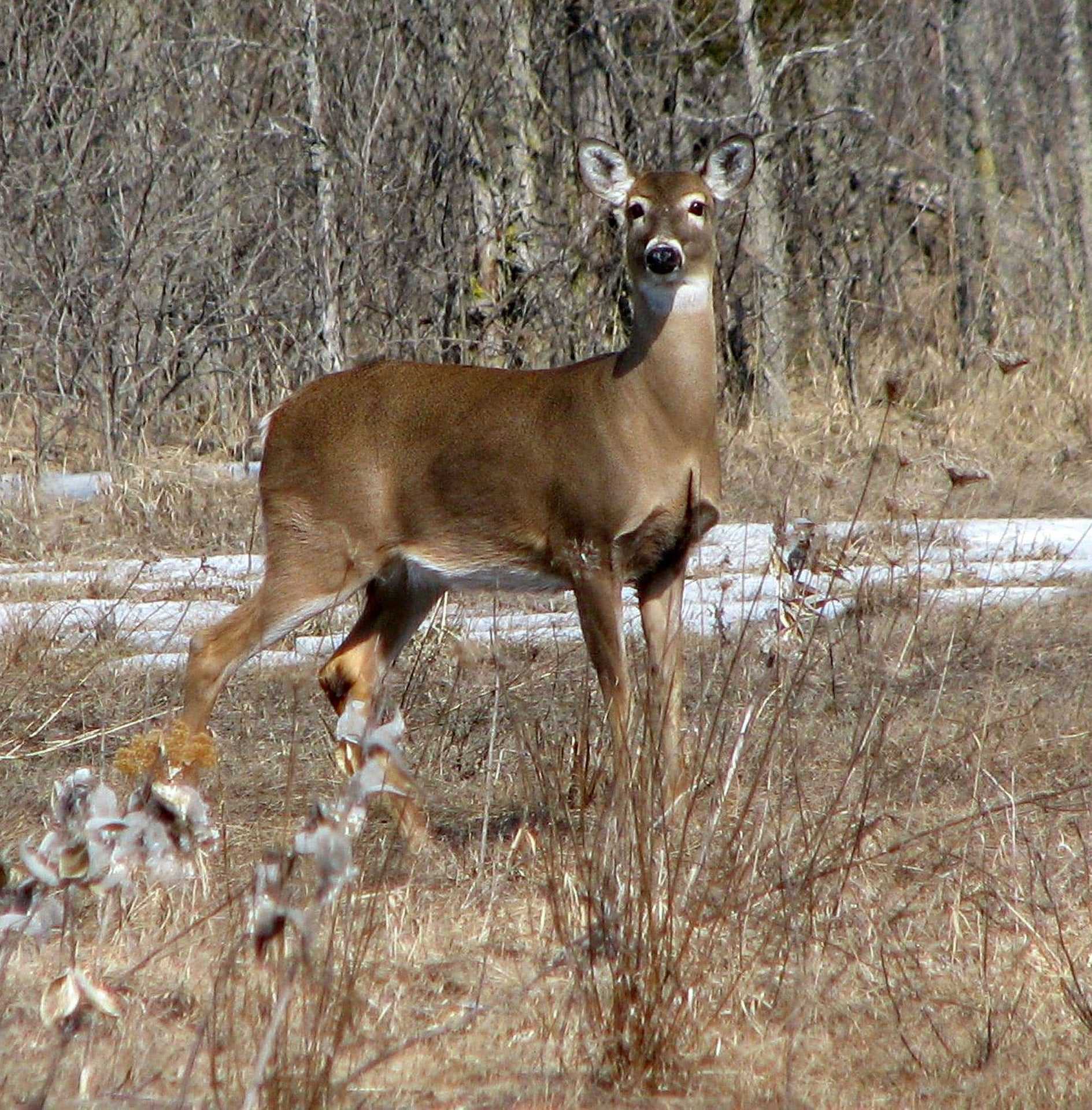 Researchers Develop New 24-Hour Test for CWD
