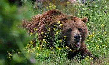 """""""He Grabbed a Quarter of My Face"""": Alaska Man Survives Brutal Brown Bear Attack"""