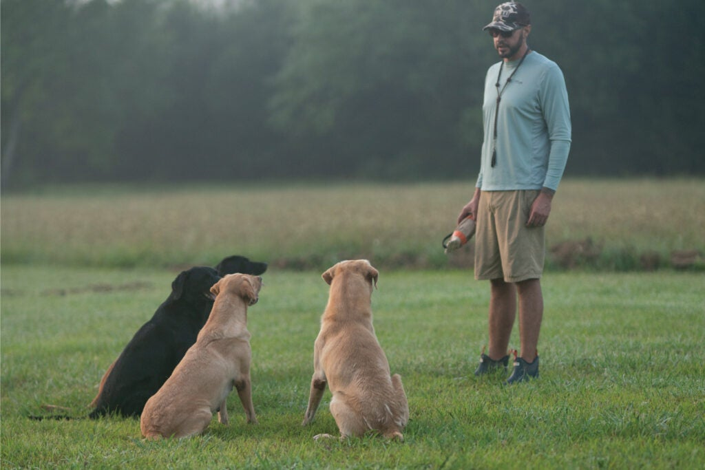 Dog trainer with three gun dogs in the field.
