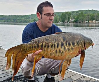 Mutant Fish: Have You Ever Seen a Carp Like This?