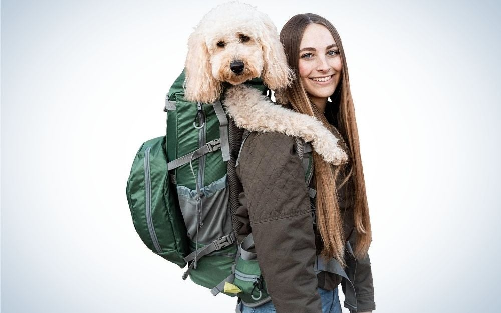 A girl who has behind her a big green backpack with a big pocket and a big white dog that she carries with her bag.