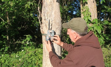 The Best Cellular Trail Camera Options for Deer Hunting