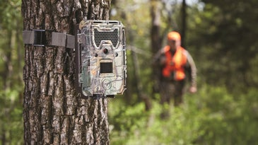 Hunter checks a trail camera for pictures of whitetail deer.