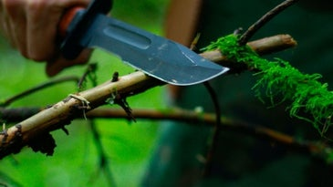 A person holding a survival knife and who is cutting a tree in a green area.