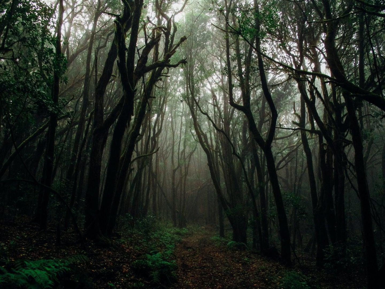 wilderness setting