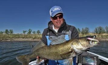 Want Big, Unpressured Walleyes? Fish the Weeds