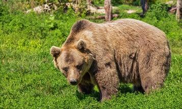 Alaska Man Survives Brown Bear Bite After Jumping into Kenai River
