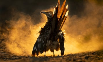 11 Spectacular Photos from the 2021 Audubon Photography Awards