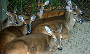 F&S Interview: Minnesota Hunter's Group Explains Why It Wants Captive Deer Farms Shut Down