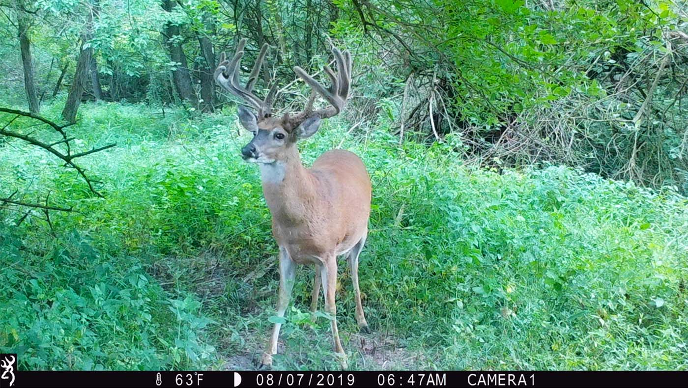 Big buck on trail camera