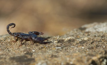 The Complete Guide to Scorpion Stings and Their Venom