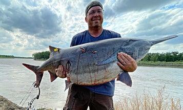 Full Story: Montana Bowfisherman Arrows World Record Paddlefish