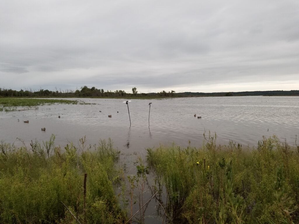 Duck hunting decoy spread for bluewing teal.
