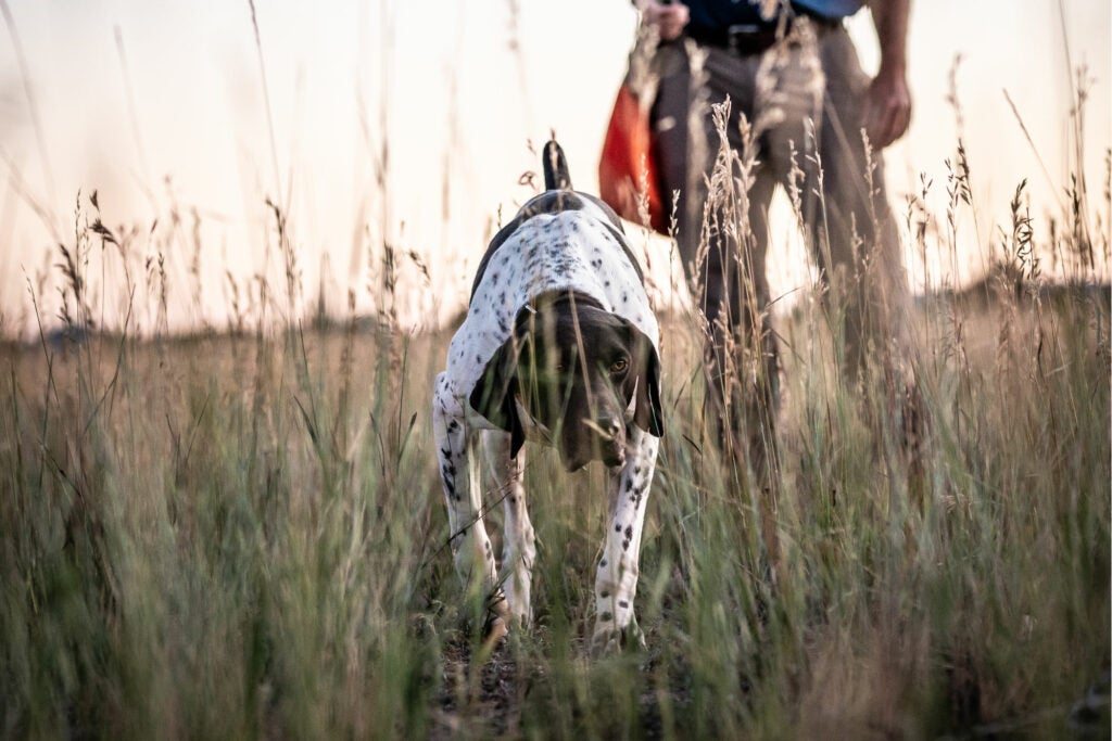 Preseason Prep: Help Get Your Dog Mentally and Physically Ready for Hunting Season