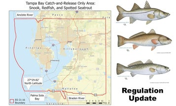 Red Tide Devastates Florida Gulf Coast Fisheries Again