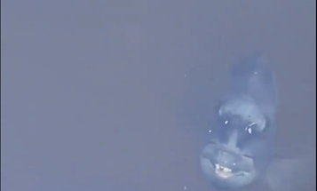 """Video: Toothy """"Demonfish"""" Lurks in Florida Canal"""