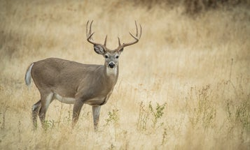 Opinion: The Three Dumbest Responses to CWD in Whitetails