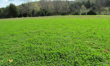 How to Finally Win the War on Weeds in Your Food Plot