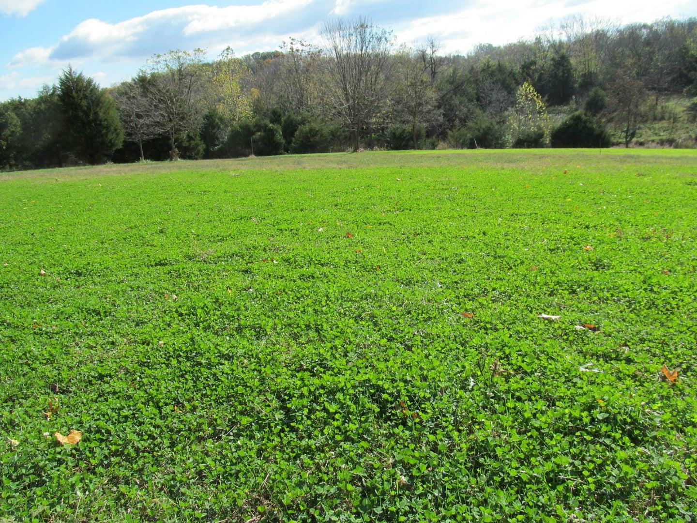 Field of clover food plot.