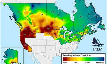"""""""Universally Dry"""": Dismal Duck Production Expected in Prairie Pothole Region—and Beyond"""