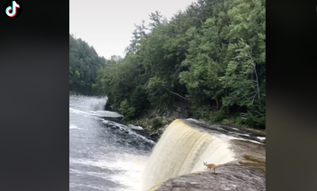 Video: Deer Launches Off 50-Foot Waterfall…And Survives