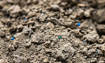 The Best Investment You Can Make for Your Food Plot is a $15 Soil Test