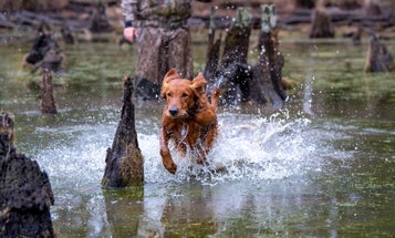 Get the Most from Your Hunting Dog This Season