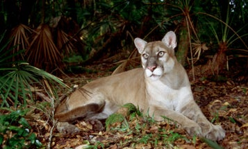 """Florida Ballot Initiative Aims to Ban Hunting of """"Iconic Species,"""" and Much More"""