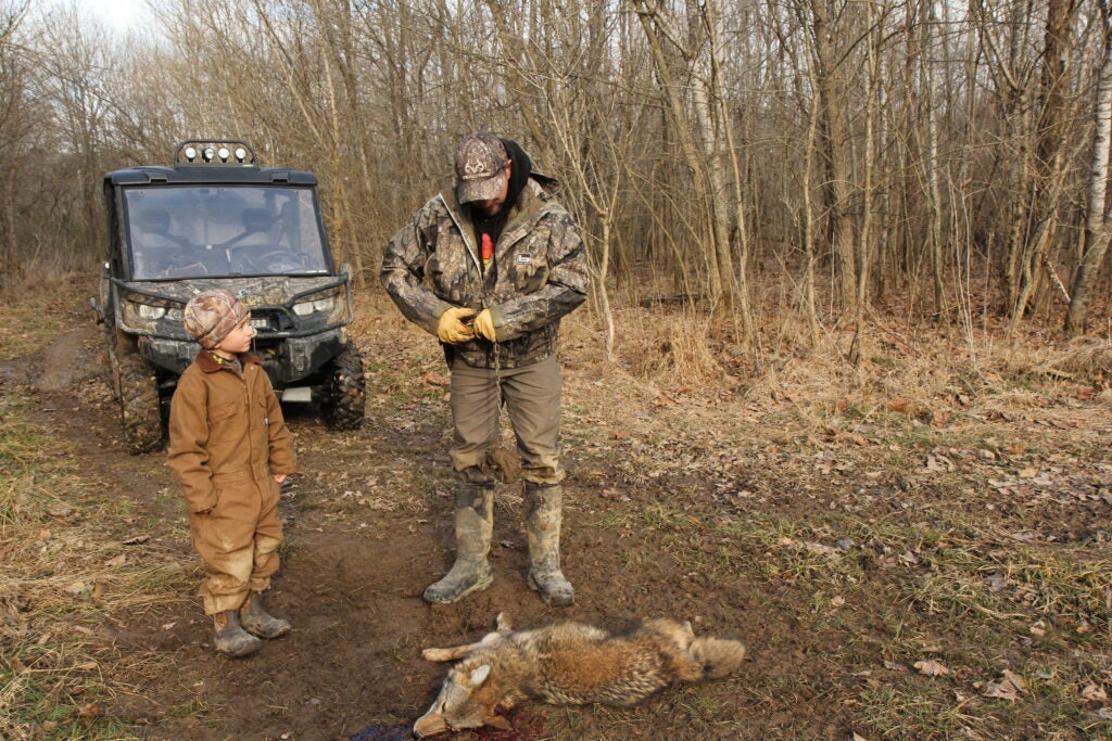 Trapping a coyote
