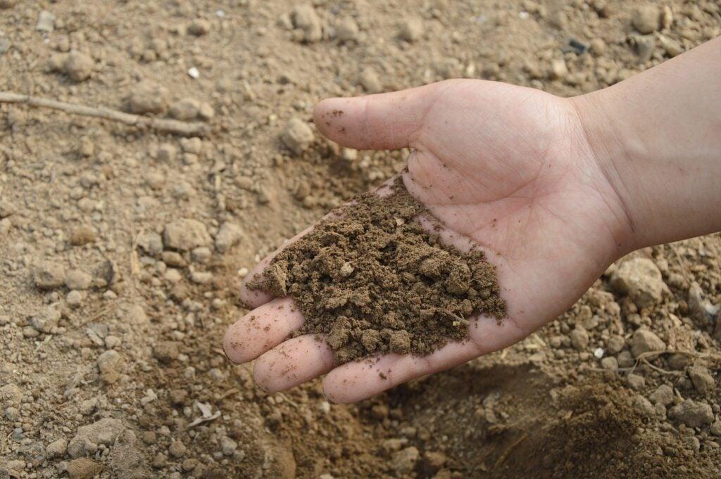 Hand holding dry soil