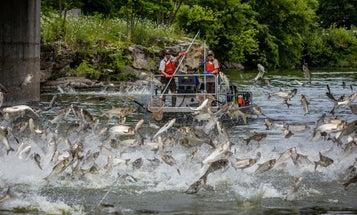 Arkansas Puts $70,000 Toward Specialized Carp Control Fleet