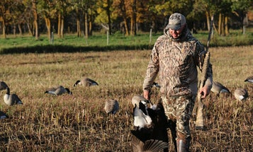 Hunting Tactics for Ultra-Wary Canada Geese in the Early Season
