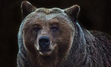 Quick-Shooting Partner Saves Alaska Man During Brown Bear Attack