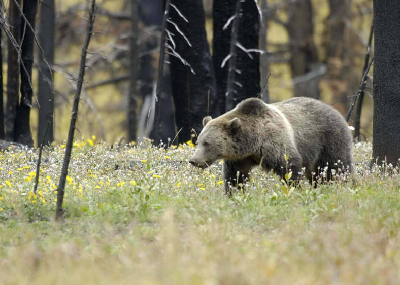 2021 Has Been a Year of Brutal Bear Attacks—And the Worst May Be Yet to Come