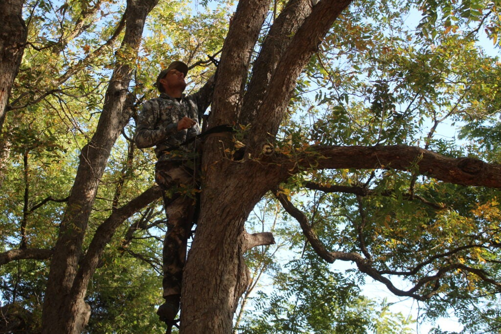 Tree stand hunting for whitetail deer