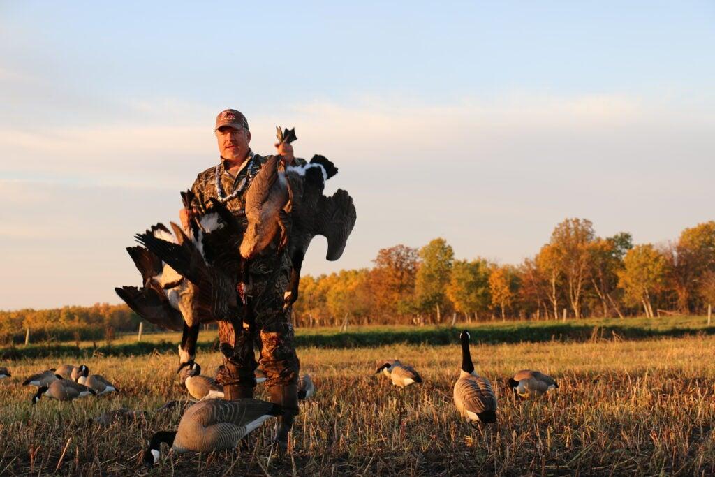 hunter retrieves Canada geese from an ag field.
