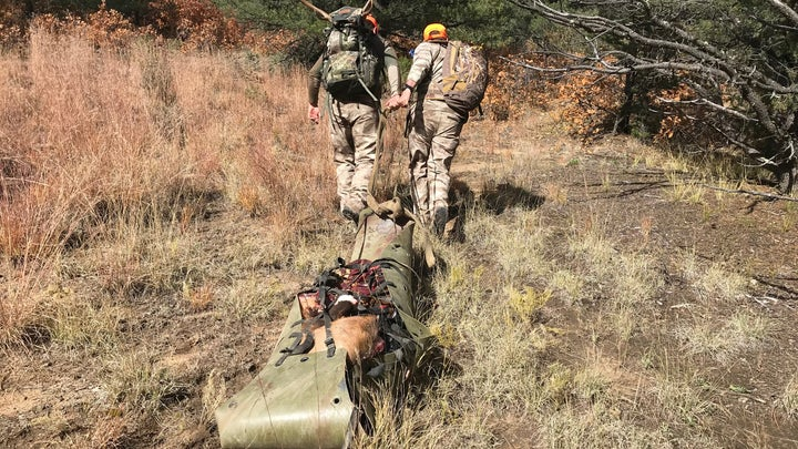 two elk hunters drag out a bull