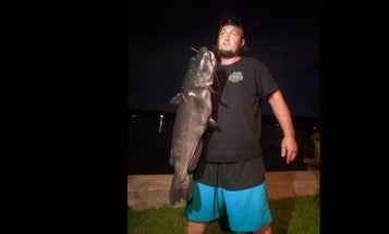 Connecticut Angler Lands Potential World Record White Catfish