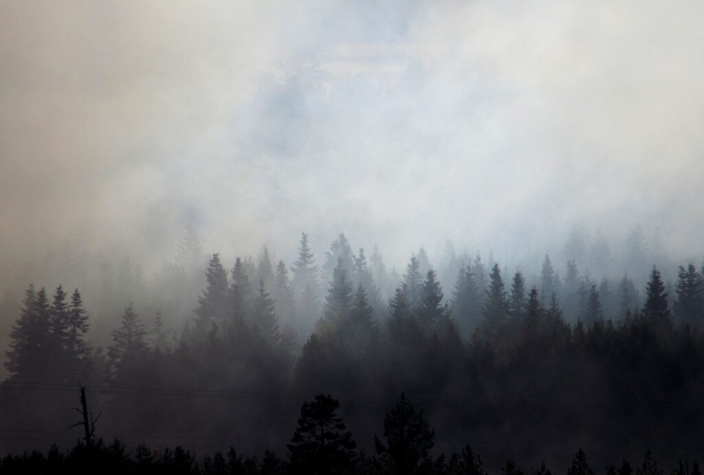 pine forest in smoke