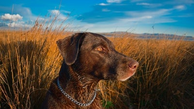 Healthy Canines: Best Flea and Tick Prevention for Dogs