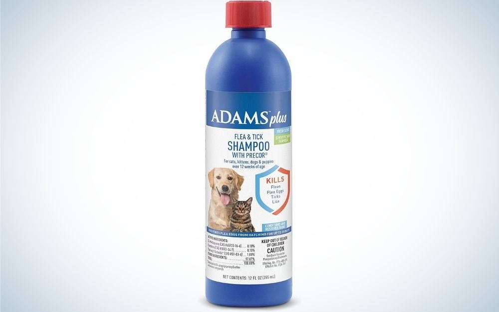 Adams shampoo is the best flea and tick protection for dogs.