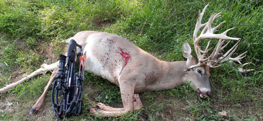 A dead deer with a large rack lies on the ground with a crossbow