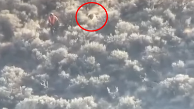 Video: Porcupine Quills Hunter—and Blows a Perfect Muley Stalk at the Last Second