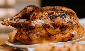 To Cook One of the Best Wild Turkey Meals Ever, You Need the Best Turkey Fryer