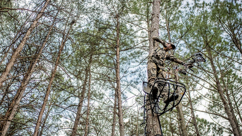 Are Single-Bevel Broadheads Better or Just a Fad?